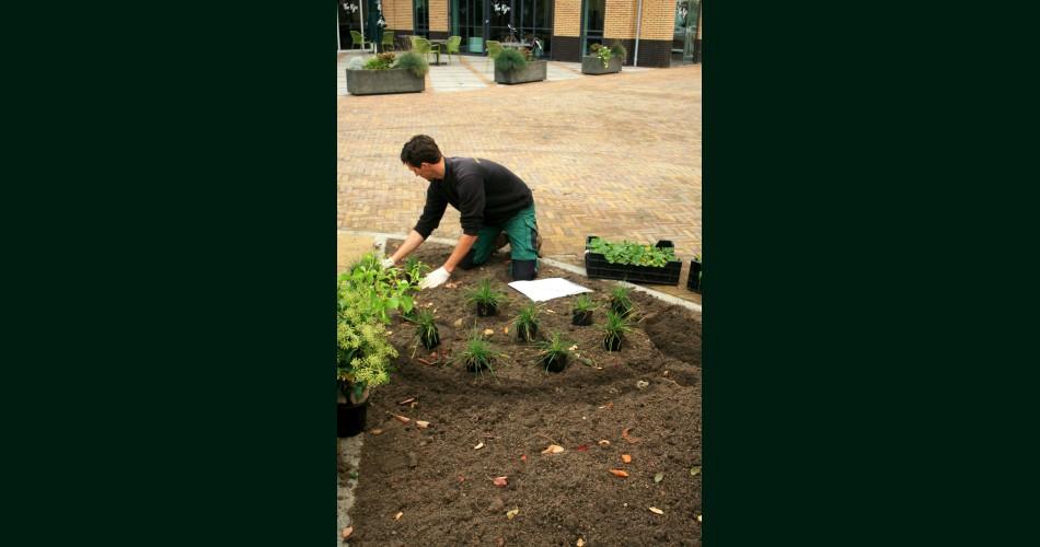 Aanbrengen beplanting.jpg