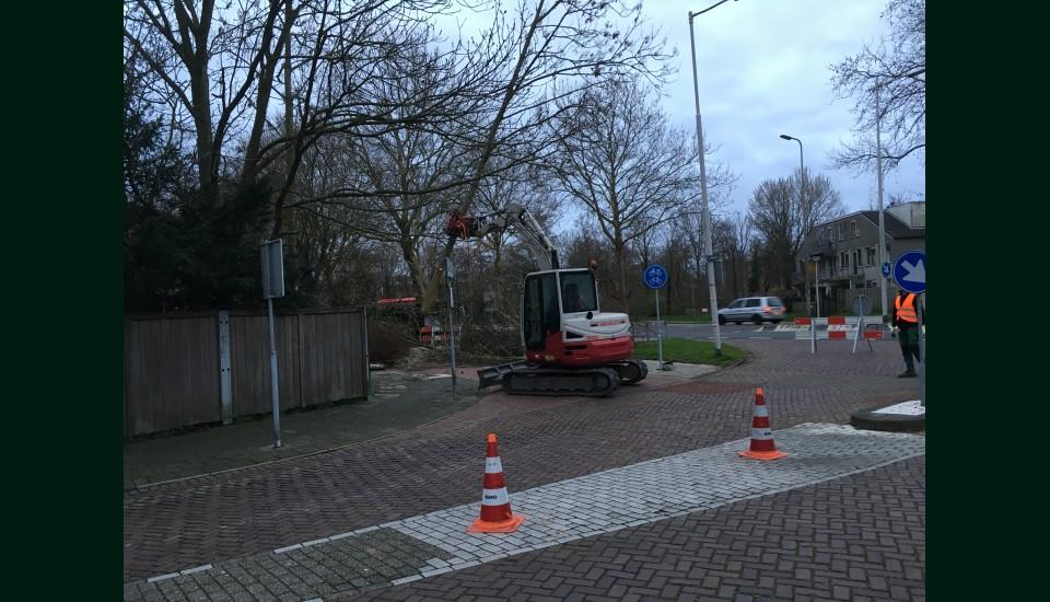 Bomenwerk SpijkenisseJPG