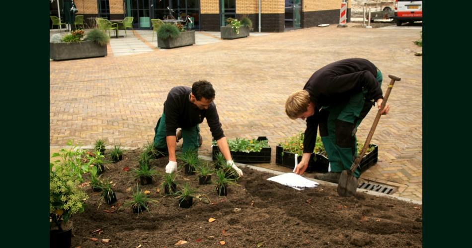 Tuinaanleg beplanting.jpg
