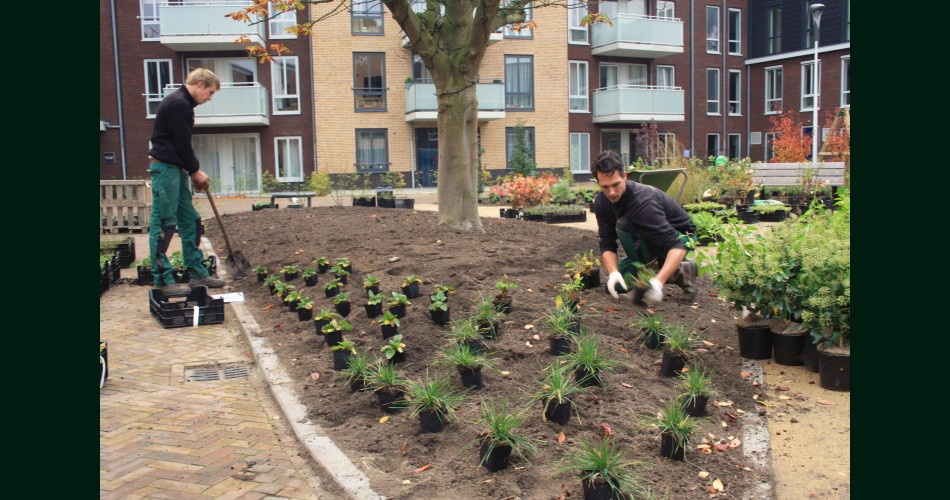 Aanleg beplanting.jpg