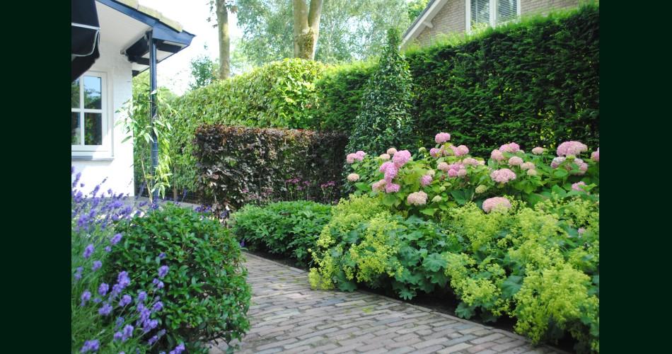 Beplanting rondom terras.JPG
