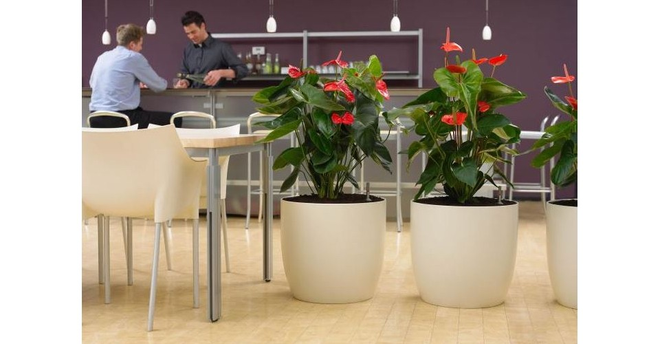 Interieurbeplanting brussaard hoveniers for Interieur beplanting